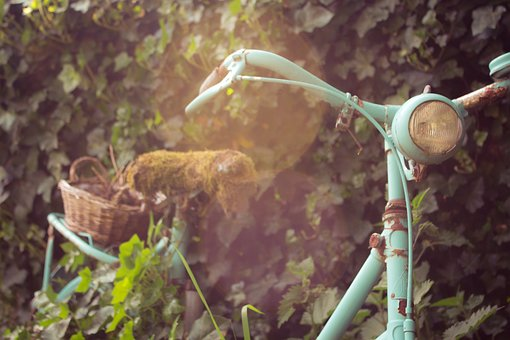 Bike, Summer, Ivy, Wall, Moss, Old, Holidays, Cozy
