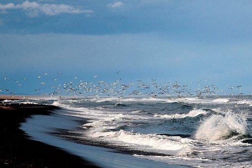 The Pacific Ocean, Coast, Beach, Wave, Gulls