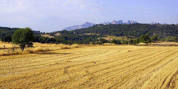 Cereals, Field, Agriculture, Crops, Plantation, Harvest