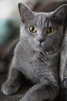 Cat, Portrait, Kitten, Domestic Cat, Animal, Pet, Cute