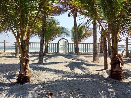 Beach, Palm Tree, Palms, Fun, El Salvador