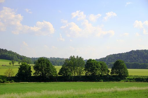Grove Of Trees, Landscape, Nature, Summer, Arable