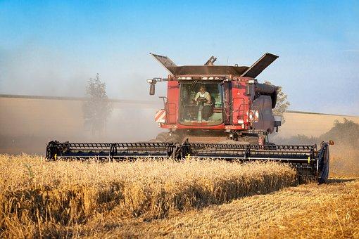 Harvester, Wheat, Field, Crop, Heaven, Corn On The Cob