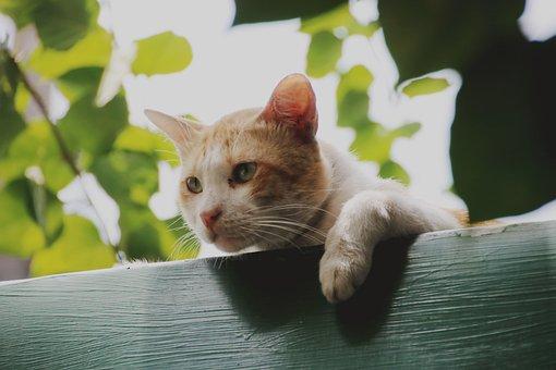 Cat, Roof, Cute, Kitten, Pet, Animal, Fur, Adorable