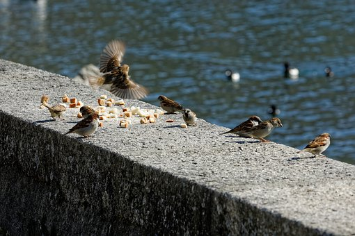 Birds, Lake, Water, Animal, Flight, Nature, Geneva, Lac