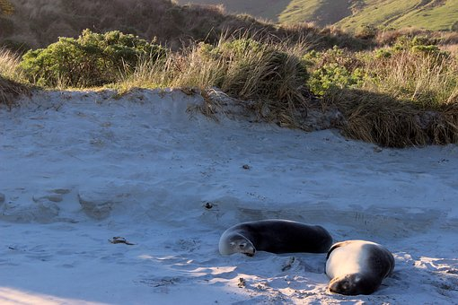 Crawl, Beach, Animals, Sand, Dunes