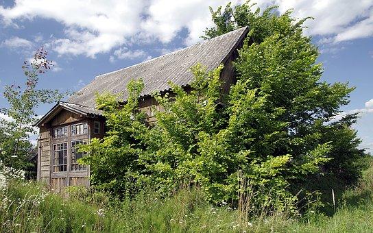 Cottage, Old, Wooden, Abandoned, Overgrown, Shrubs