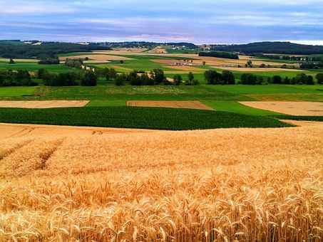 Burgenland, Fields, Nature, Agriculture