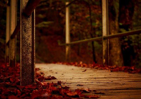 Autumn, Fall, Falling Leaves, Macro, Closeup, Bridge