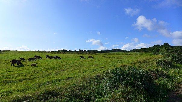 Taiwan, Butyl 墾, Tsai Po Cage Prairie