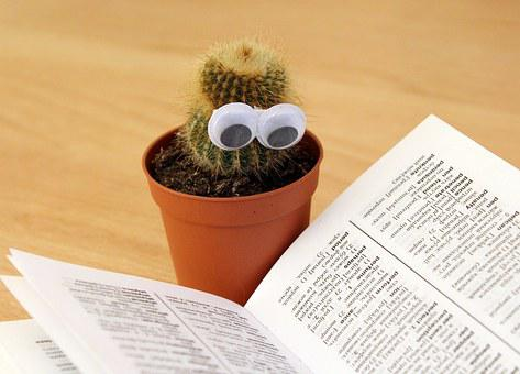 Cactus, Eyes, Book, Pot, Reading, Education, Study