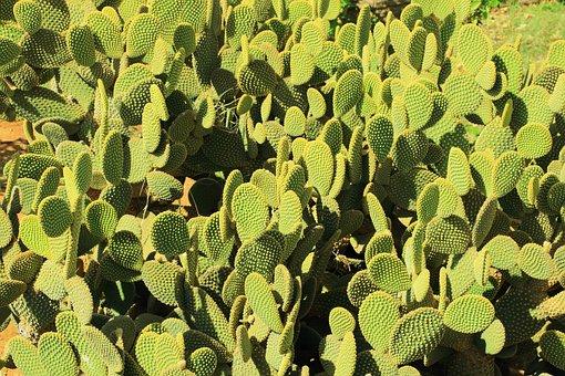 Cactus, Desert, Prickly, Dry, Sting, Spur