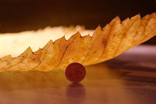 Elm Leaf, Mountain Elm, Macro, Close, Elm Leaves