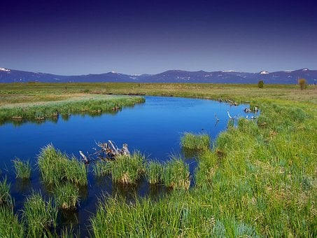 Oregon, Wood River Marsh, Water, Stream, Plants, Grass