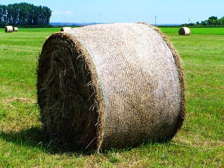 Hay Bale, Forage, Mown Field