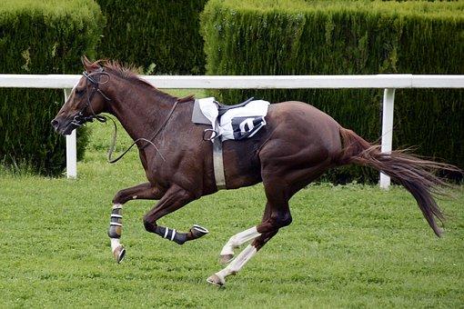 Horse Racing, Racecourse, Competition, Jokey, Horses