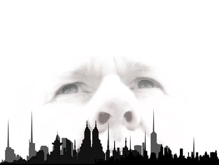 Silhouette, City, Skyscrapers, Face, Eyes, Sky