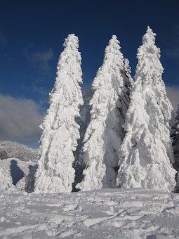 Fir, Snow, Winter, Snowy, Wintry, Winter Magic