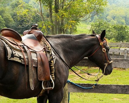 Horse, Western Saddle, Pomel, Horn, Stirrup, Cantle