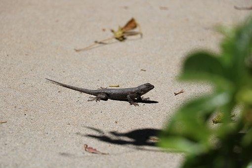 Lizard, Nature, Animal, Reptile, Wildlife, Dragon