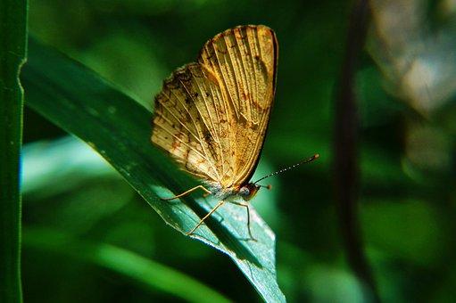 Butterflies, Macro, Microphotographing, Garden, Leaves