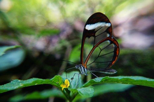 Butterflies, Polinizacion, Flowers, Garden, El Salvador