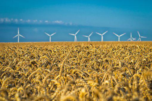 Agriculture, Field, Cereals, Grain, Nature, Food, Wheat