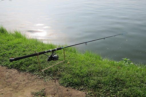 Fishing Rod, Fishing, Hobby, Leisure, Catch, Reel