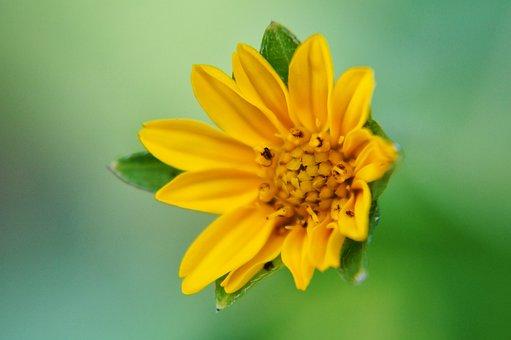 Flowers, Petal, Stamens, Gardening, Garden, Leaves