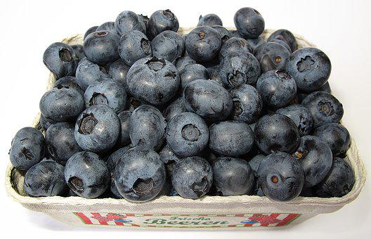 Blueberry, Black Berry, Vaccinium Corymbosum, Frisch