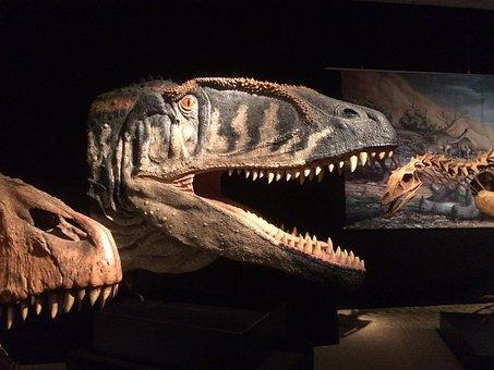 Museum Of Natural History, Berlin, Dinosaur, Tristan