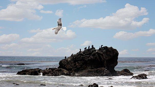 Beach, Leo Carillo, California, Landscape, Ocean