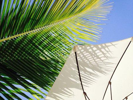 Landscape, Coconut Tree, Sombreiro, Sky, Brazil