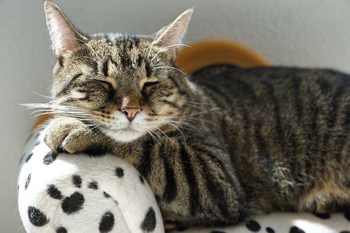 Cat, Tiger, Rest, Furniture, Dalmatians, Dog, Tigerle