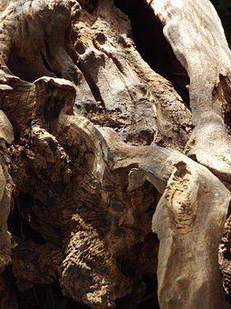 Tree Stump, Aged, Nature, Wooden, Texture, Timber, Old
