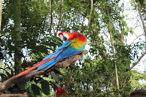 Arara, Bird, Tropical Bird, Brazilian Fauna