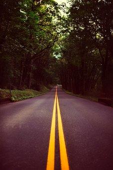 Oregon, Landscape, Forest, Trees, Woods, Road, Highway