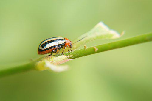 Insects, Entomology, Science, Biology, Nature