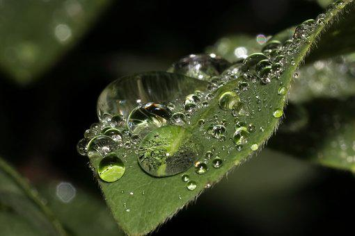 Leaf, Drop Of Water, Rain, Raindrop, Frisch, Wet, Drip