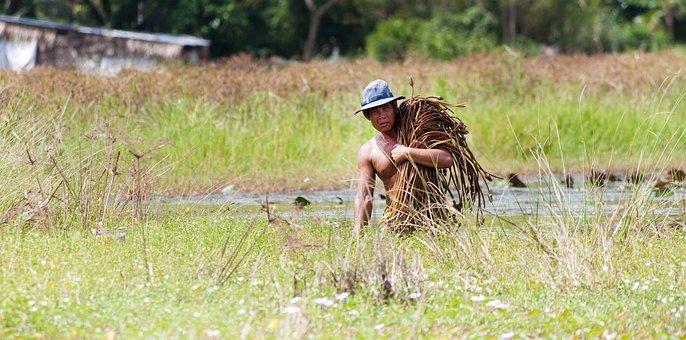 Farmer Men, Miserable, Livelihood, Farmer