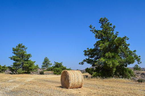 Trees, Landscape, Field, Hay Bale, Nature, Forest