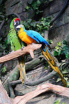 Parrot, Parrots, A Flock Of, Feathered Race, Birds, Zoo