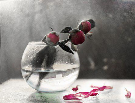 Peony, Light, Glass, Macro, Cold, Surface, Contrast