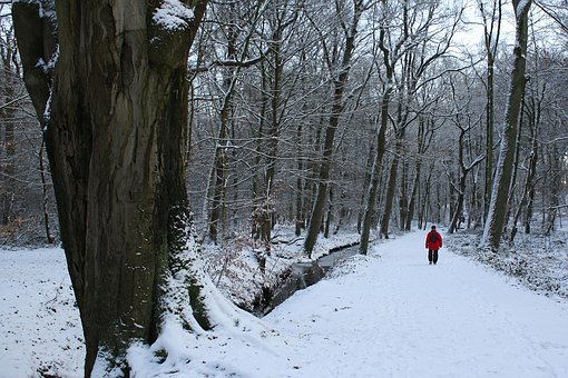 Winter, Walkers, Snow, Walk, Cold, Human, Wintry, Trees