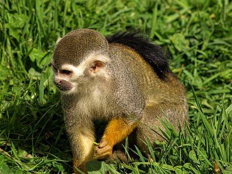 Animal, Monkey, Wild, Nature, Zoo, Wildlife, Funny