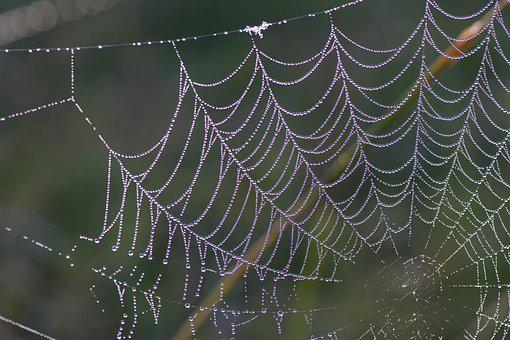 Cobweb, Spider, Spiderweb, Trap, Pattern, Bug, Wildlife