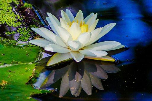Water, Flower, Nature, Garden, Plant, Spring, Summer