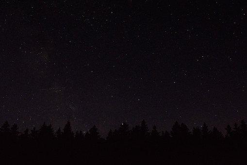 Stars, Trees, Forest, Solitude, Night, Heaven, Nature