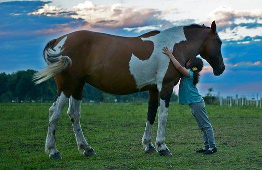 Horse, Field, Girl Horse, Girl Field, Friend Horse