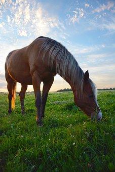 Horse Grazing, Horse, Pasture, Sky, Horse Heaven